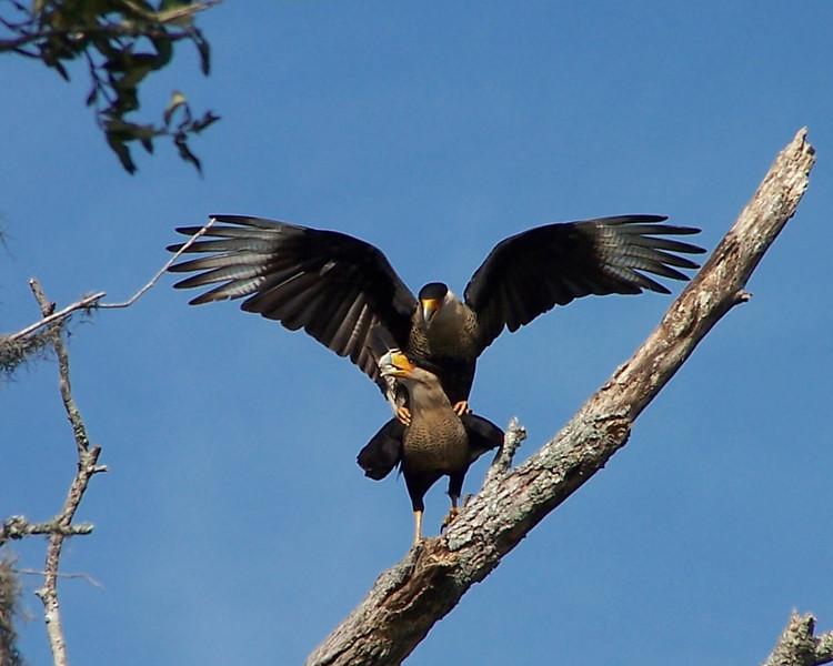 Fowl Play<br /> Photo by Lori Burris