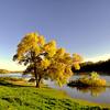Oak tree on the east bank of the St Croix River, Prescott, WI