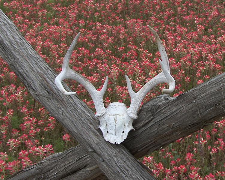 Earl Calhoun — Bleach Buck on a Rai