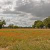 Robert Kamper - Meadow at Berry Springs Park