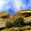Mia McCraw - Sky cactus