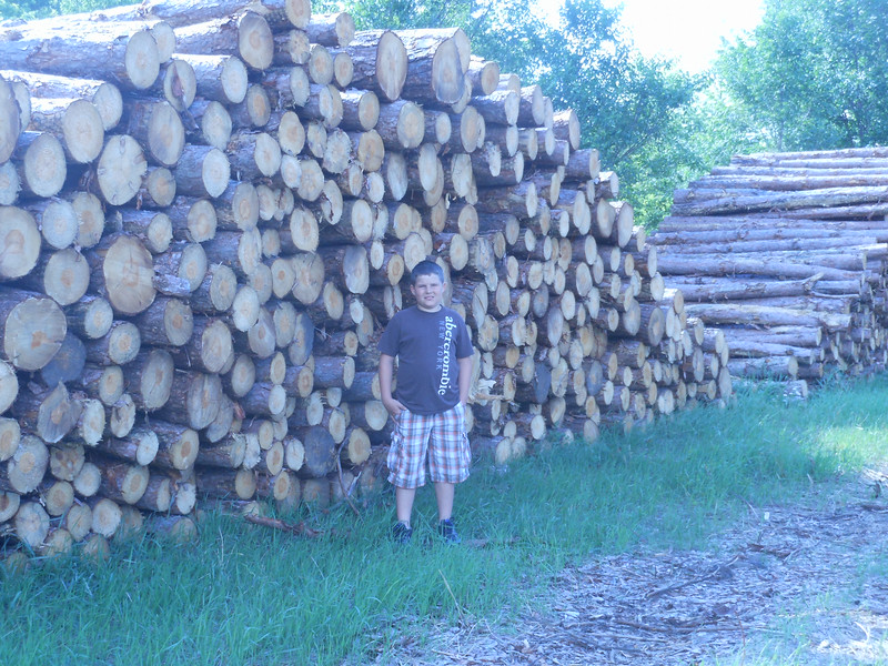 Tower of Logs