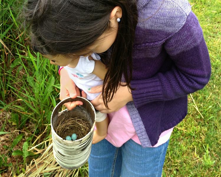 Checking Bluebird Nest