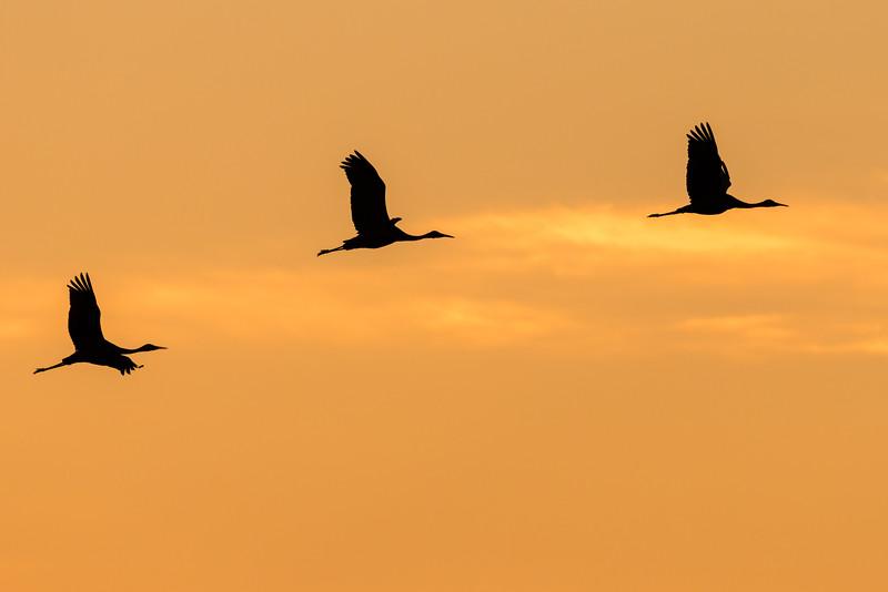 Across The Morning Sky