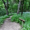 Judson Trail