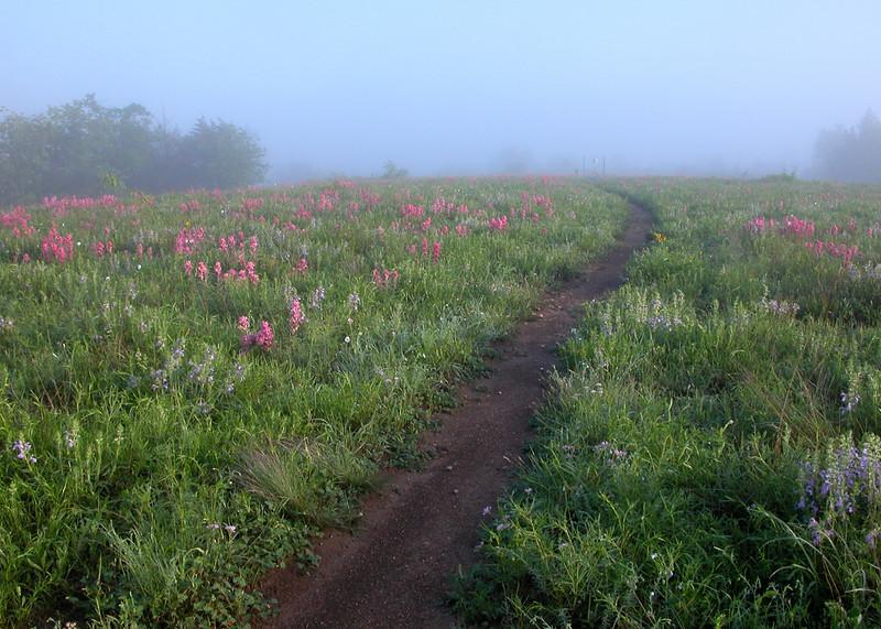 Fog on the prairie