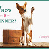 Your adorable pet could be a winner!