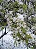 Snow Flowers