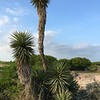 Gulf Coast Prairies and Marshes Photo #4