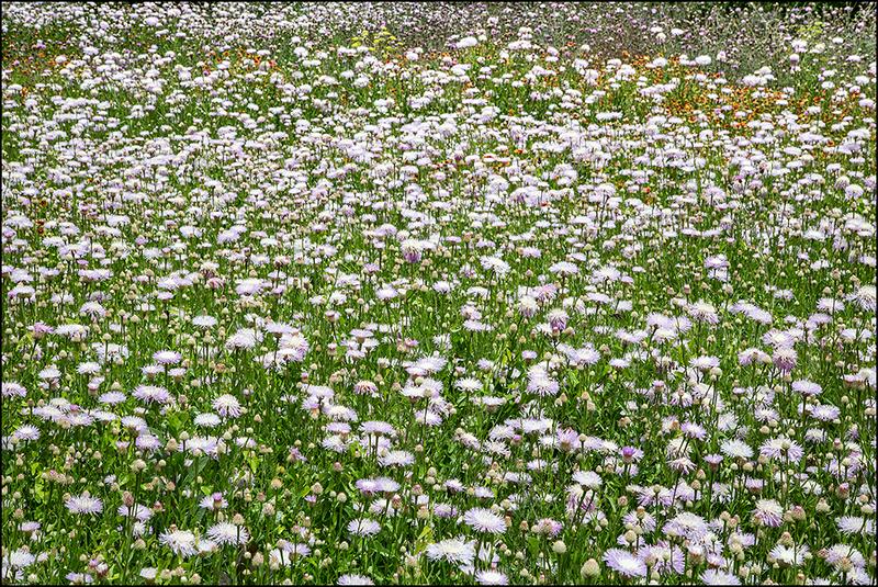 Texas Blackland Prairies Photo #1