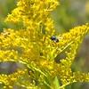 Texas Blackland Prairies Photo #3