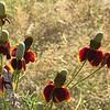 Texas Blackland Prairies Photo #5