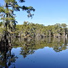 Western Gulf Plain Photo #3