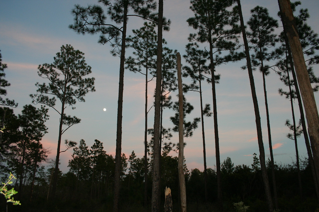 "Trail Magic - 1st Place  ""Moonrise Over Pat's Island"" by Mike Wade  Ocala National Forest"