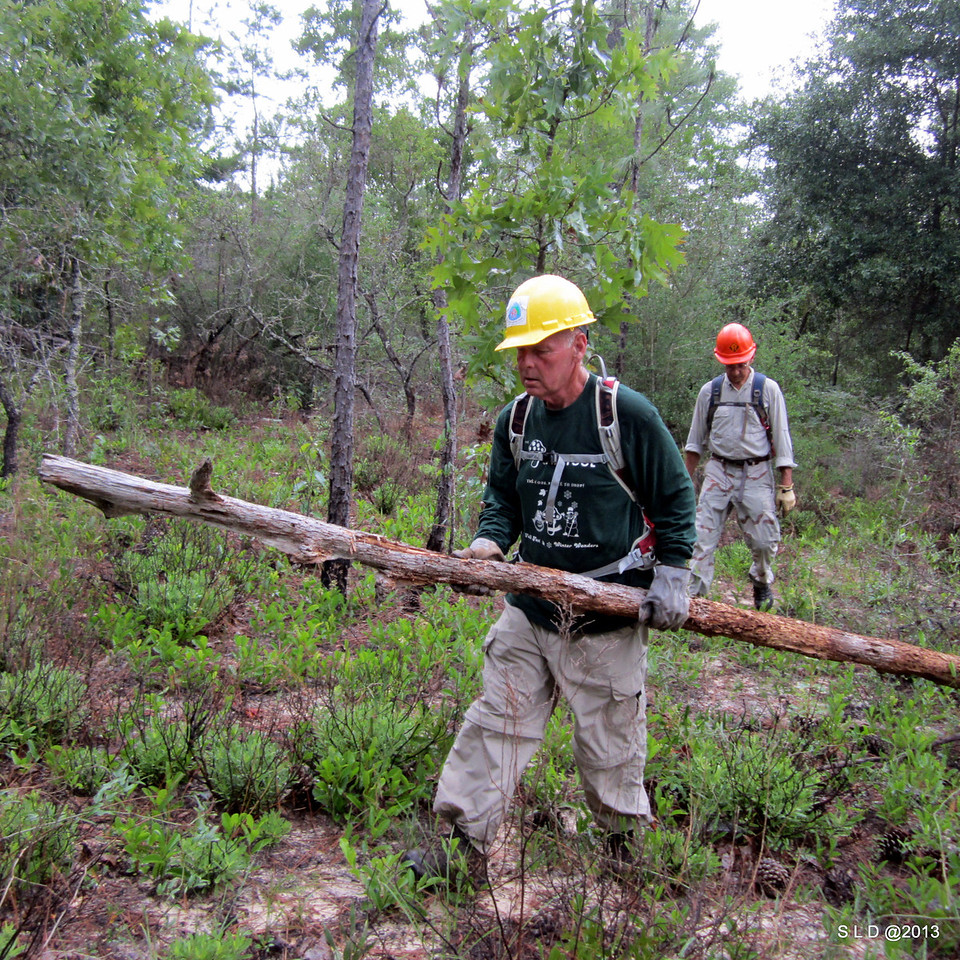 """Trail Volunteers - 1st Place  """"Gathering Signposts"""" by Steve Duke  Eglin Air Force Base"""
