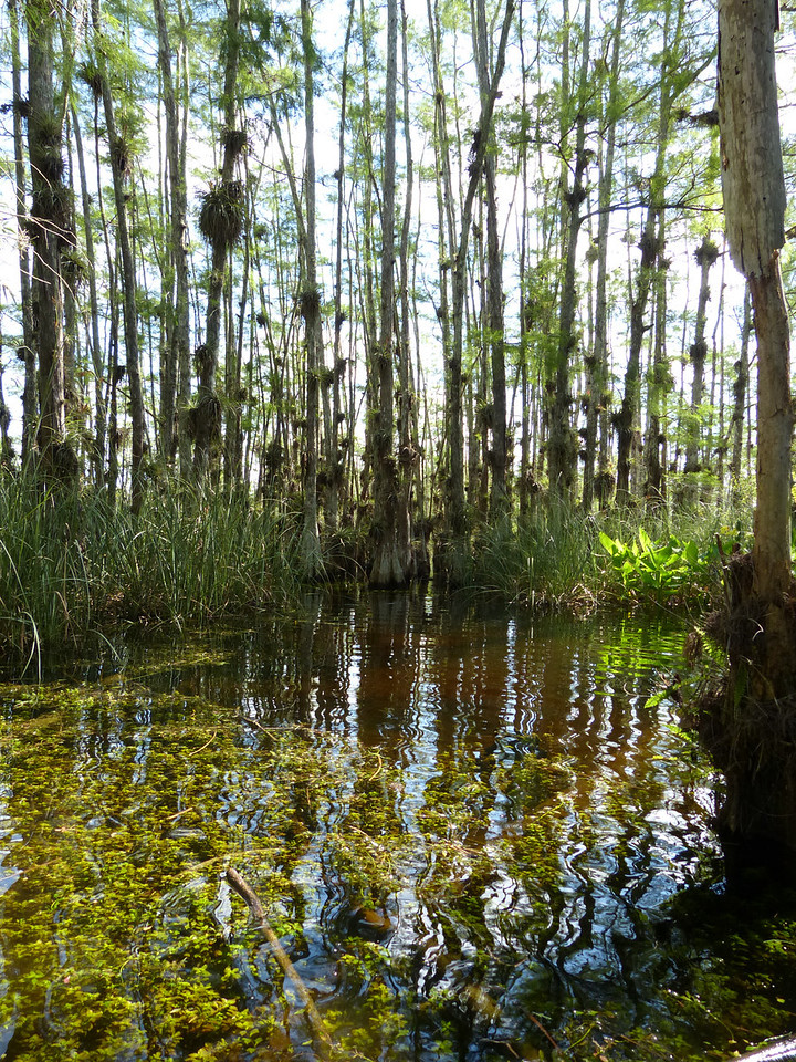 """Magazine Cover-1st Place   """"Mystery Dome"""" by Amos Stoll   Big Cypress National Preserve"""