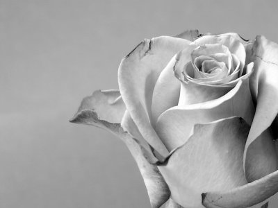Here you have a sample of the original rose in black & white tones.