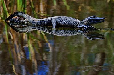 BBSP_Small_alligator_full-body_WCW8821
