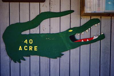 1-26-2011 Brazos Bend State Park