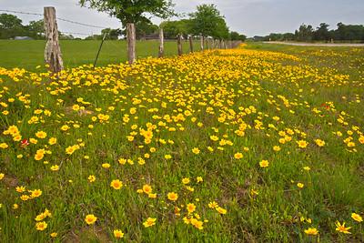 04022018_Wildflower_Trip__750_5663a