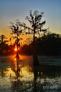 03152018_Lake_Martin_Lafayette_LA_Sunrise_Cypress-trees_750_5526