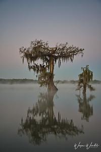 03162018_Lake_Martin_Lafayette_LA_Single-tree_Pre-dawn_750_5502