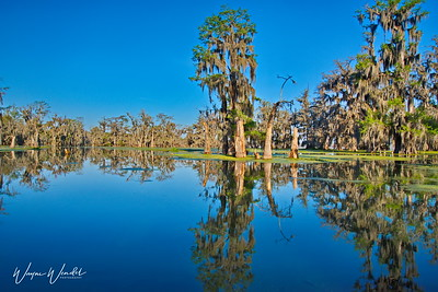 03152018_Lake_Martin_Lafayette_LA_Cypress_Reflections_750_5607