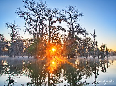 03152018_Lake_Martin_Lafayette_LA_Sunrise_Thru_Trees_750_5554