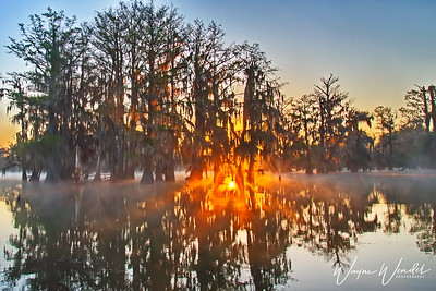 03152018_Lake_Martin_Lafayette_LA_Sunrise_Thru_Trees_750_5531