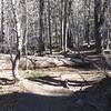 Thomas Creek Trail