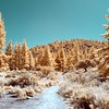 Start of the Trail - I'm using a 590nm Infrared filter.