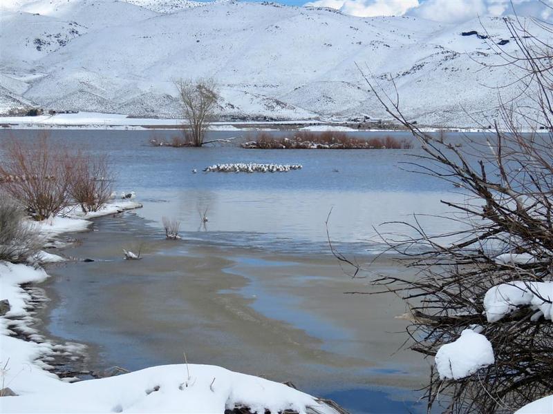 March 17, 2018 - At Washoe Lake - Seagulls