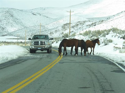 March 17, 2018 - At Washoe Lake - wild horses getting a drink