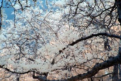 Trees at Rancho San Rafael