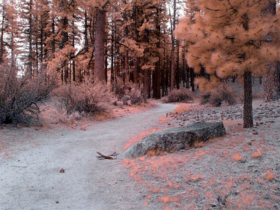 Entering the Pinkish Forest.