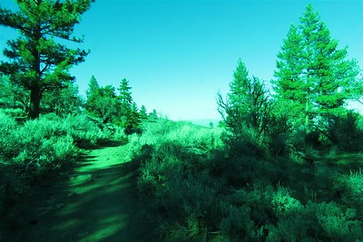 Thomas Creek Trail near the parking lot.