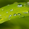 Close up of water droplets on grass leaf