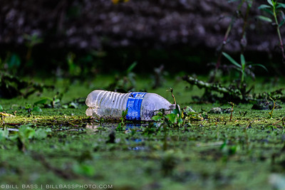 Plastic Bottle in Riparian Area