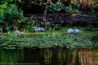 Plastic Bottles in Riparian Area