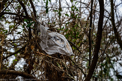 Plastic bags when not properly disposed will find their way into vegatation and become entangled. It only takes a light breeze to lift these items into the air and travel many miles.