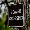 Beaver crossing sign at the Beaver Pond on the Spring Creek Nature Trail in The Woodlands, Texas.