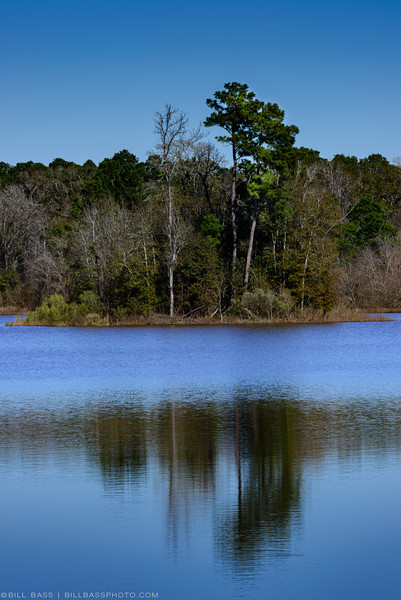 One of several lakes on the western portion of the Spring Creek Nature Trail in The Woodlands, Texas. These lakes provide valuable habitat to a variety of bird and other aquatic species.