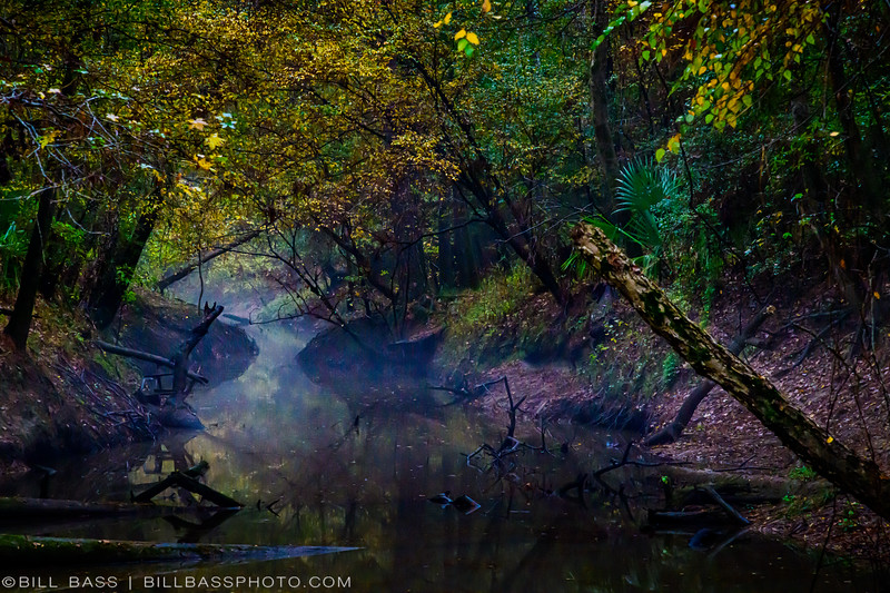Foggy morning and fall colors on the Spring Creek Nature Trail in The Woodlands, Texas.
