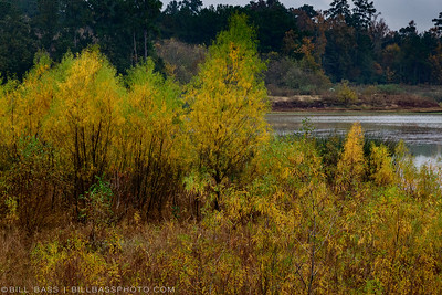 Fall colors on the Spring Creek Nature Trail in The Woodlands, Texas.