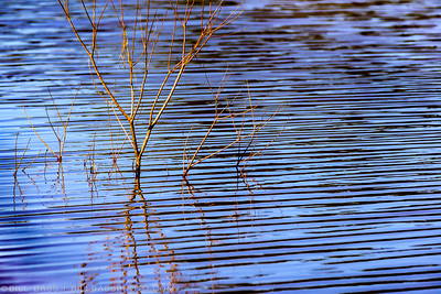 Ripples on the surface of a lake along the Spring Creek Nature Trail in The Woodlands, Texas.