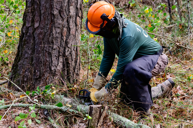BLC Trail Crew cuts a Chinese Tallow tree as part of the invasive removal efforts along the trail. Tallow trees are invasive species and impact the ability of native tree species to flourish.