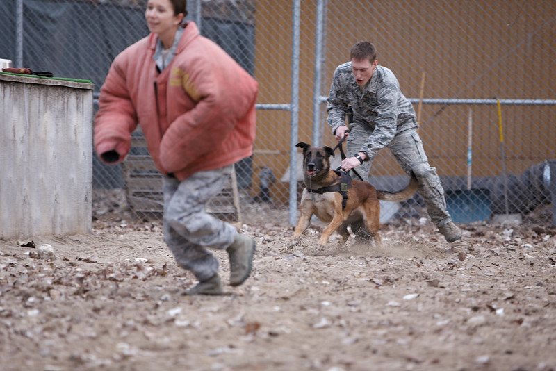 In this training exercise, 376th Expeditionary Security Forces Squadron/K9 Handler Senior Airman Matthew Pettit, center, takes Military Working Dog Yyoda off leash after Kennel Master E5 Staff Sergeant Janna McDonald disregards an order to halt and runs, at the Transit Center at Manas, Kyrgyzstan, on Sunday, Dec. 15, 2013. (Young Kwak/The Pacific Northwest Inlander)