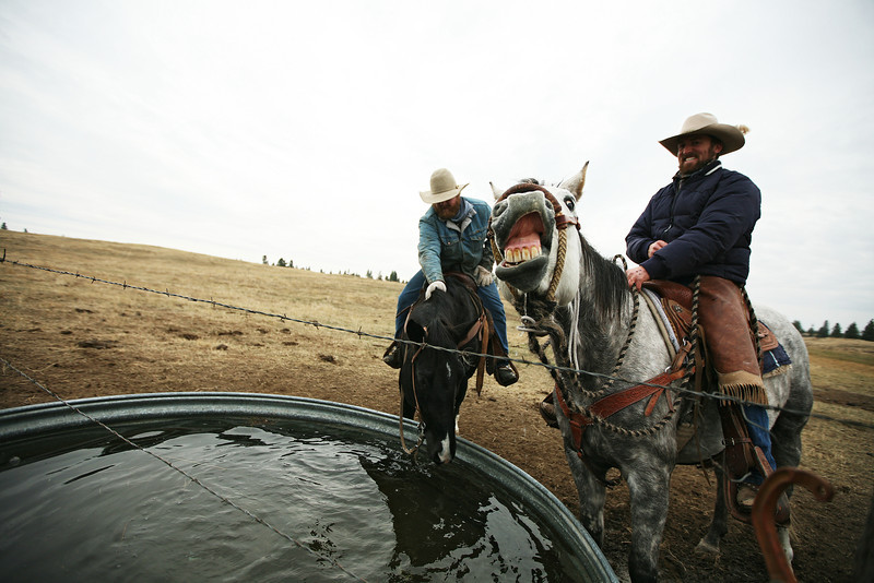 Cody Dix Harris, right, and Nate Gutzwiller water their horses at Main Place at Lazy H Ranches, in Cheney, Wash., on Monday, November 7, 2011. (Young Kwak Special to the Pacific Northwest Inlander)