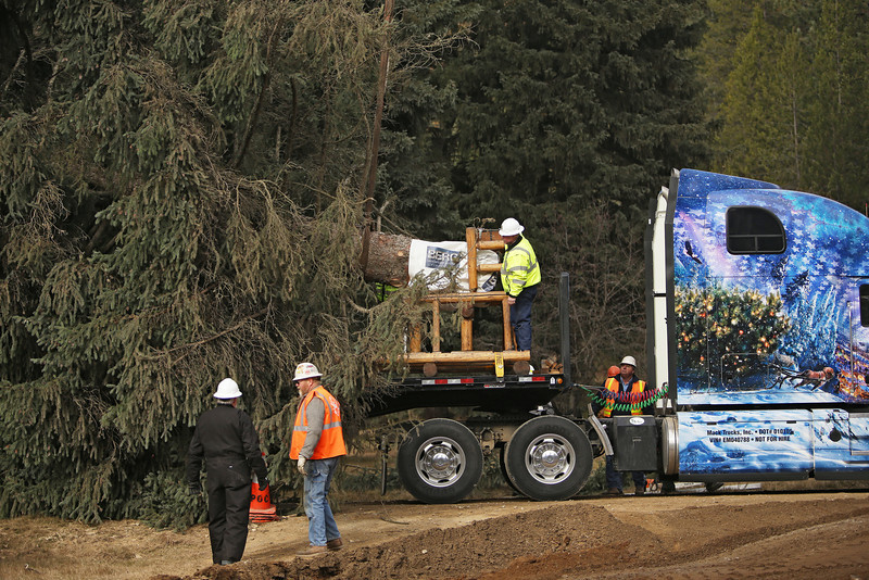 Workers guide an eighty-eight foot Engelmann Spruce, destined to be the U.S. Capitol Christmas Tree, onto a truck, in the Colville National Forest, in Pend Oreille County, Wash., on Friday, November 1, 2013. (Young Kwak/The Pacific Northwest Inlander)