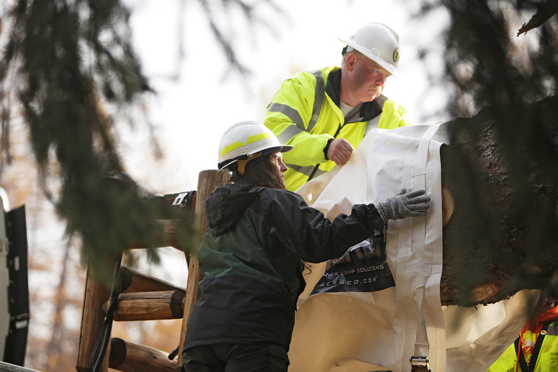 U.S. Forest Service employee Cally Davidson, left, and Pend Oreille County Public Works employee Bernie Nelson place a bag on the base of an eighty-eight foot Engelmann Spruce, destined to be the U.S. Capitol Christmas Tree, in the Colville National Forest, in Pend Oreille County, Wash., on Friday, November 1, 2013. (Young Kwak/The Pacific Northwest Inlander)